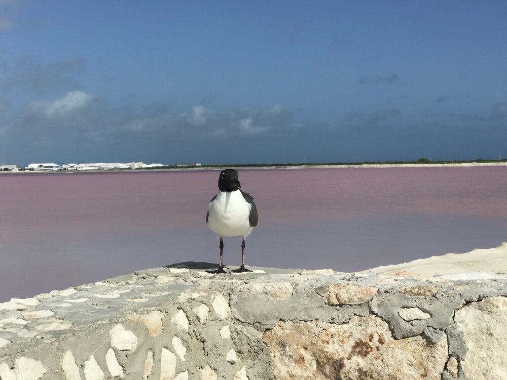 Pink lake in Las Coloradas